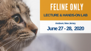 Feline Only SDEP® Lecture & Hands-On Ultrasound Scanning Lab, June 27- 28, 2020